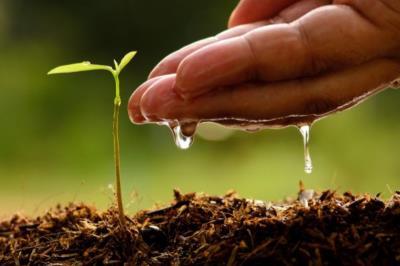 Regione: bando di concorso per tecnici del settore agrario e forestale
