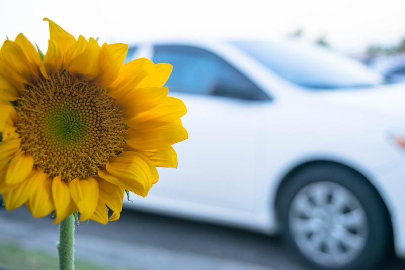 Bando Rinnova Autovetture: contributi per la sostituzione di autoveicoli inquinanti con veicoli a basso impatto ambientale destinati al trasporto di persone